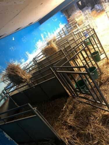 6 IAE Calf Rearing Pens 6'x3'  and Bucket Holders Unused Shop Soiled